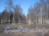 Парк «Александрино» со стороны ул. Козлова. Фото март 2012 г.
