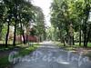 Перспектива 1-й Березовой аллеи от Каменноостровского проспекта в сторону Средней аллеи. Фото сентябрь 2011 г.