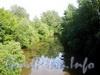 Река Оккервиль на участке от Уткина пешеходного моста в сторону Заневского моста. Фото июнь 2009 г.