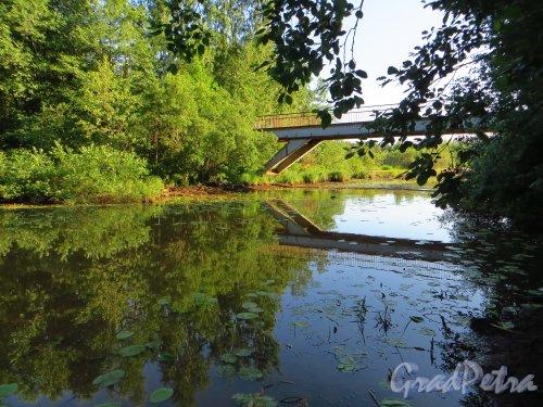 Река Малая Сестра. Пешеходный мост включающий в себя теплотрассу. Общий вид. Фото 4 июля 2013 г.
