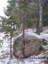 Лен. обл., Выборгский р-н, Маяк Стирсудден. Камень между маяком и Приморским шоссе. Фото 7 декабря 2013 г.