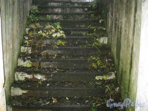 Лен. обл., Кингисеппский р-н, дер. Онстопель. Бывшая в/ч базирования ракет Р-12.  Фрагмент подземного бункера (ступеньки лестницы наверх). Фото 20 октября 2010 г.