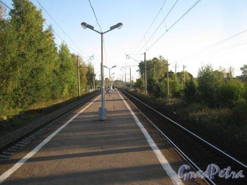 Лен. обл., Гатчинский р-н, пос. Сусанино. Ж/д платформа. Вид в сторону Вырицы. Фото сентябрь 2013 г.