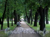 Аллея в Михайловском саду. Фото август 2010 г.