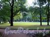 В Михайловском саду. Фото август 2010 г.