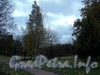 В саду Смольного. Фото октябрь 2010 г.