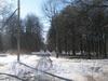 Аллея в парке Александрино. Фото март 2012 г. от дома 71 корпус 5 по пр. Ветеранов. Вид в сторону ул. Козлова.