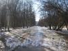 Аллея парка «Александрино» от дома 75, корпус 3 по пр. Ветеранов в сторону ул. Козлова. Фото март 2012 г.