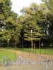 Вяземский сад. Фото сентябрь 2010 г.