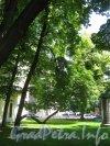 Сквер имени Андрея Петрова. Деревья на территории сквера. Фото 7 июля 2012 г.