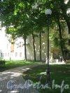 Сквер имени Андрея Петрова. Деревья на территории сквера возле дома 45 по Большой Пушкарской ул. Фото 7 июля 2012 г.