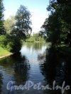 Московский Парк Победы. Адмиралтейский пруд. Фото июнь 2010 г.