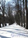 парк Павловский. Тройная липовая аллея. Фото апрель 2012 г