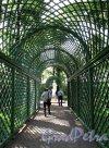 Летний сад. Берсо. Фото июнь 2012 г.