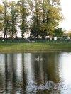 Летний сад. Карпиев пруд с лебедями. Фото октябрь 2012 г.
