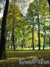 Михайловский сад. Аллеи в районе Садовой ул. Фото октябрь 2012 г.
