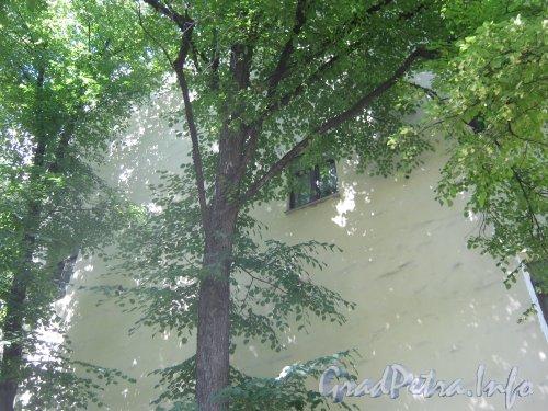 Сквер имени Андрея Петрова. Деревья на территории сквера возле дома 32 по Каменноостровскому пр. Фото 7 июля 2012 г.