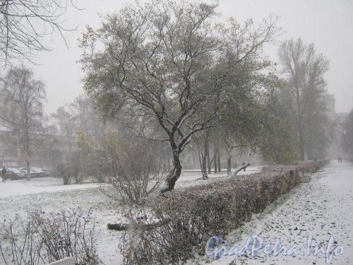 Сквер перед ДК им. И.И. Газа. Снегопад утром 29 октября 2012 г.