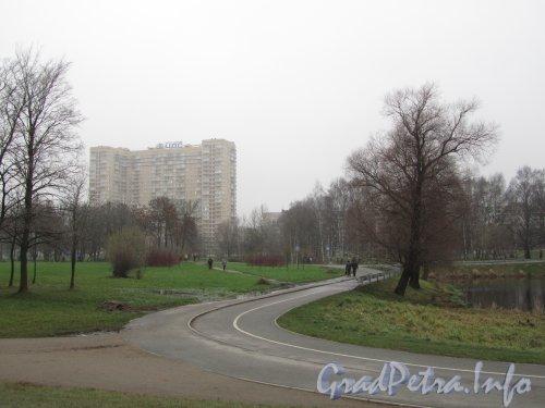 Муринский парк со стороны Северного проспекта в районе разлива Муринского ручья. Фото 25 ноября 2012 г.