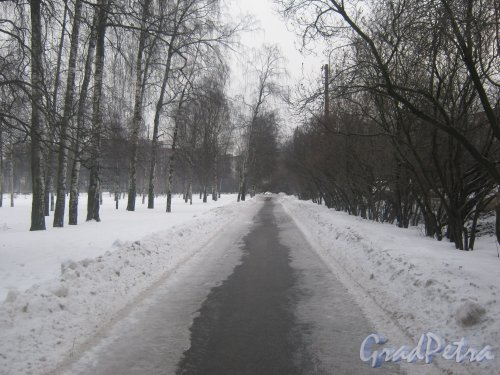 Сад Бенуа (тропинка параллельно пр. Науки). Вид в сторону ул. Веденеева. Фото 17 февраля 2013 г.