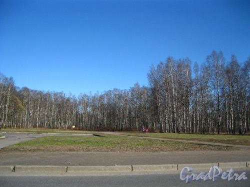 Участок Пискаревского парка со стороны улицы Бутлерова. Фото 28 апреля 2013 года.