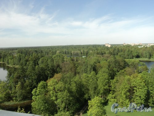 Перспектива Дворцового парка в Гатчине. Фото май 2010 г.