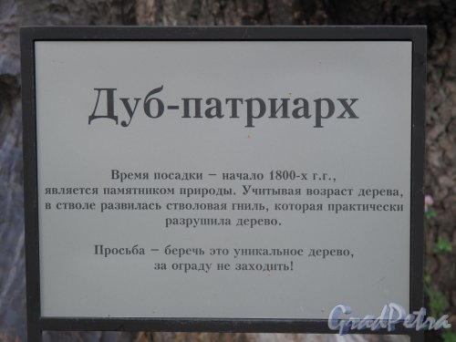 парк Павловский. Дуб-патриарх. Табличка-объяснение. Фото октябрь 2012 г