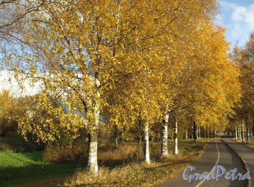 Муринский парк. Аллея с дорожкой для роллеров. Фото октябрь 2013 г.