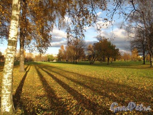 Муринский парк. Луг вдоль проспекта Луначарского. Фото октябрь 2013 г.