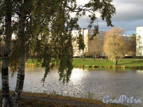 Муринский парк. Вид на пруд пр. Луначарского и ул. Демьяна Бедного. Фото октябрь 2013 г.