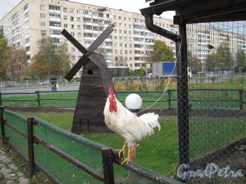 "Муринский парк. Птичник ресторана ""Чинар"". Фото октябрь 2012 г."