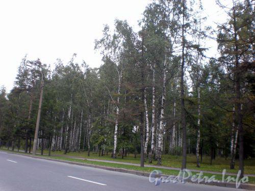 Вид на парк Сосновка со стороны пр. М. Тореза. Сентябрь 2008 г.