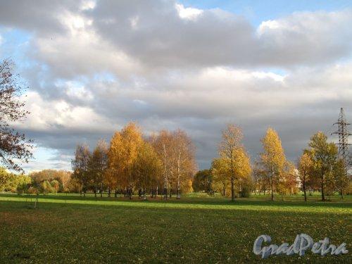 Муринский парк. Луговой район. Фото октябрь 2013 г.