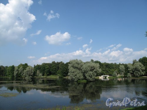 Гатчинский (Дворцовый) парк.  Белый пруд и Карпин мост. Фото август 2013 г.