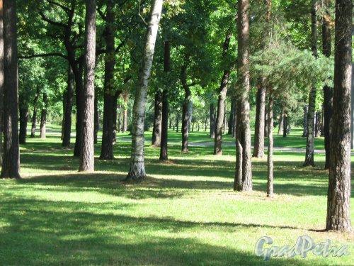 парк Сосновка. Вид одного из газонов. Фото август 2005 г.