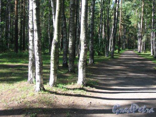 парк Сосновка. Дорожка парка. Фото август 2005 г.