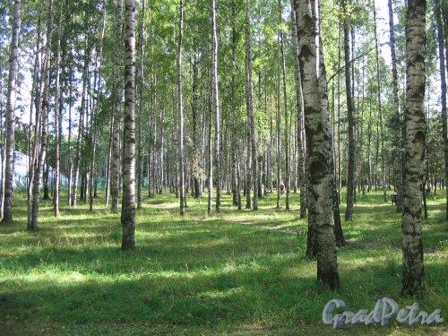 парк Сосновка. Вид на район парка. Фото август 2005 г.
