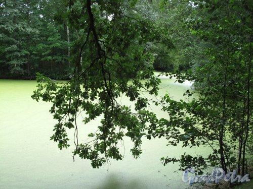 Приморский парк Победы. Один из райнов парка. Фото июль 2010 г.