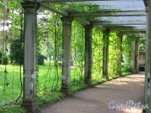 Екатерининский парк (г. Пушкин). Собственный садик. Пергола. Фото август 2005 г.