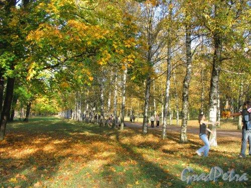 Александровский парк (г. Пушкин). Аллея парка. Фото сентябрь 2007 г.