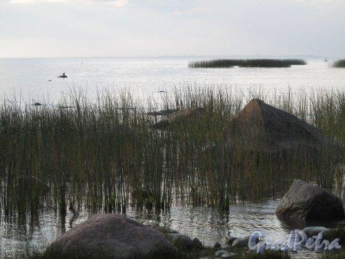 парк Александрия. Берег залива. Фото август 2009 г.