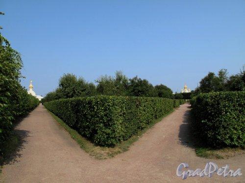 Верхний парк (Петергоф). Пересечение дорожек. Фото август 2010 г.