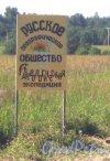 Лен. обл., Гатчинский р-н. Информационный щит об археологической экспедиции на берегу реки Суйда между деревнями Ковшово, Виркино и Красницы. Вид с грунтовой дороги Виркино - Красницы. Фото 5 июля 2013 г.