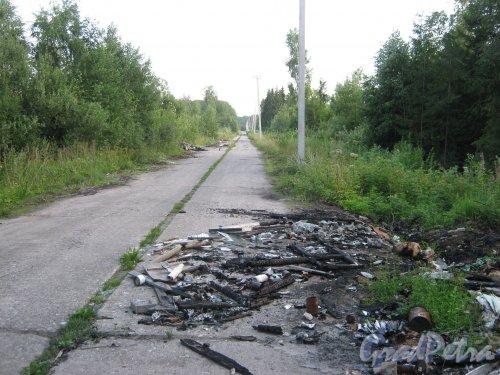 Лен. обл., Гатчинский р-н, дорога от бывшей в/ч в сторону шоссе А-120 в районе посёлков Семрино и Сусанино. Фото июль 2011 г.