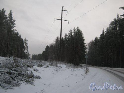 Лен. обл., Выборгский р-н, Приморское шоссе (недалеко от пос. Ермилово). ВЛ, пересекающая шоссе. Фото 7 декабря 2013 г.