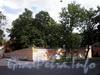 Большой пр., В.О., д. 30 / 10-я линия В.О., д. 3. Территория комплекса Патриотического института (Энергетического техникума). Фото август 2009 г.