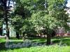 Большой пр., В.О., д. 85. Главный (средний корпус) больницы Покровской общины сестер милосердия (им. Ленина). Реставрация центральной части фасада. Фото сентябрь 2009 г.