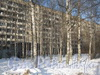 Ириновский пр., дом 37, корп. 1. Вид дома сквозь (берёзовую рощу) во дворе. Фото февраль 2012 г.