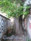 Каменноостровский пр., дом 26-28. Гаражи в 1 дворе и дерево между ними. Фото 7 июля 2012 г.