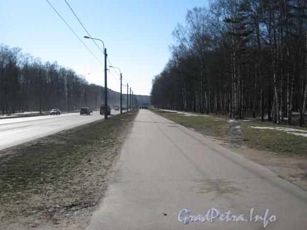 Пешеходная дорожка параллельно пр. Ветеранов и парку «Александрино». Фото март 2012 г.